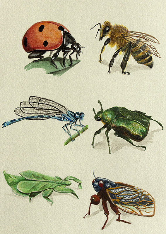 insects paint illustration