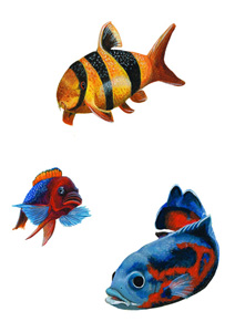 loaches and african fish  paint illustration