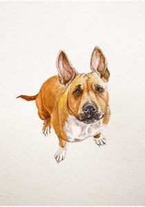 pet portrait dog